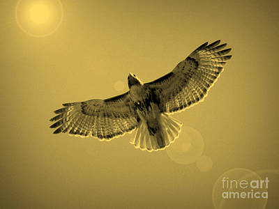 Red Shouldered Hawk Photograph - Into The Light - Sepia by Carol Groenen