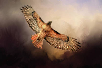 Red Tail Hawk Wall Art - Photograph - Into The Light by Donna Kennedy