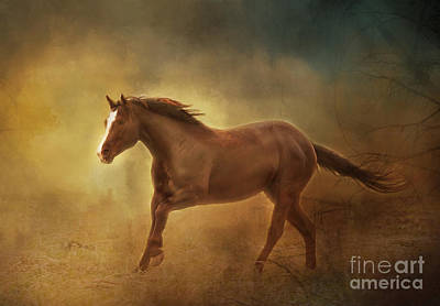Photograph - Into The Light Horse Digital Painterly by Clare VanderVeen