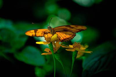 Butterfly Photograph - Into The Light by Jennifer Luzio