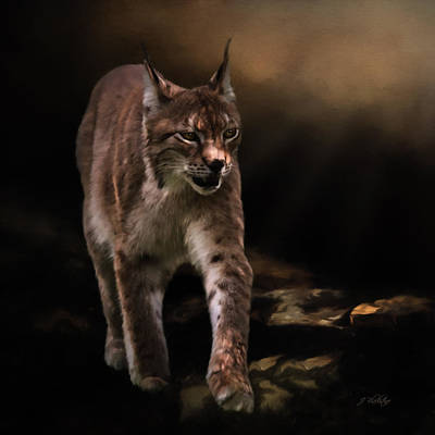 Painting - Into The Light - Lynx Art by Jordan Blackstone