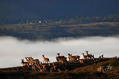 Photograph - Into The Mist by Gavin MacRae