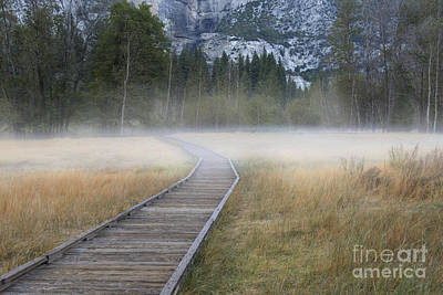 Photograph - Into The Mist by Sandra Bronstein