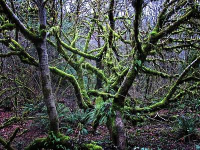 Photograph - Into The Mossy Forest by Katie Wing Vigil
