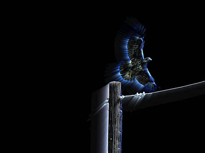 Red Tail Hawk Digital Art - Into The Night by Andy Klamar