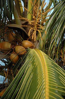 Photograph - Into The Palm by Lori Mellen-Pagliaro
