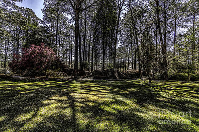 Photograph - Into The Piney Woods  by Ken Frischkorn