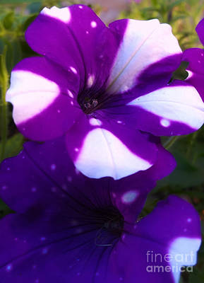 Photograph - Into The Purple by Robert Knight