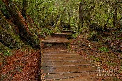 Photograph - Into The Rainforest by Adam Jewell