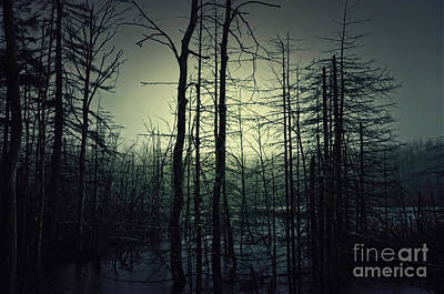 Photograph - Into The Swamp by Debra Fedchin