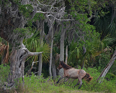 Photograph - Into The Thicket Of Cumberland Island by Carla Parris