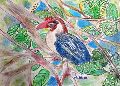 Rain Forest Drawing - Into The Tropics The Majestic Writhed Hornbill Series 1 by Carmela Maglasang