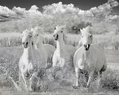 Photograph - Into The Wind by Karen Lynch