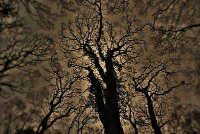 Photograph - Symbiance by Steven Poulton