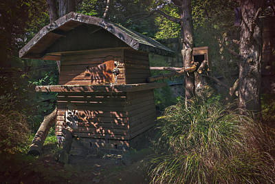 Log Cabin Photograph - Into The Woods by Carol Japp