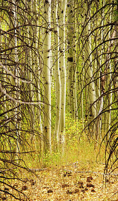 Photograph - Into The Woods - Hope Valley Ca by Eleanor Caputo