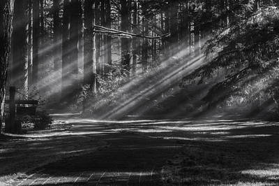 Sun Rays Photograph - Into The Woods by Mark Kiver