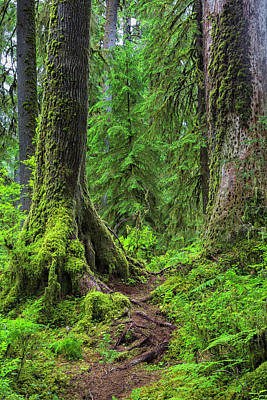 Olympic National Park Photograph - Into The Woods by Stephen Stookey