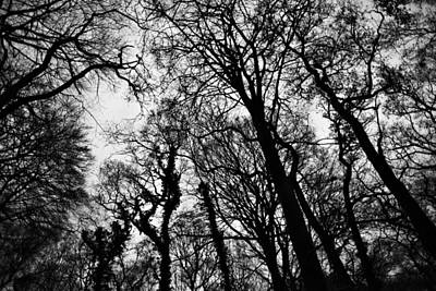 Photograph - Into The Woods by Steven Poulton