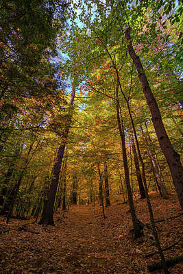 Colorful Leaves Photograph - Into Vaughan Woods by Rick Berk