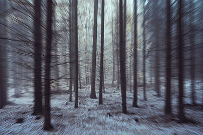 Photograph - Into Woods. Zoom In  by Jenny Rainbow