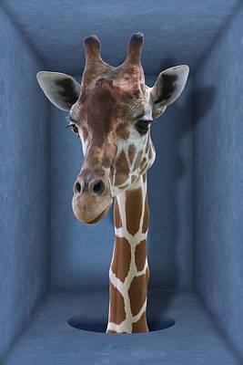 Digital Art - Introvert - Shy Giraffe by Debi Dalio