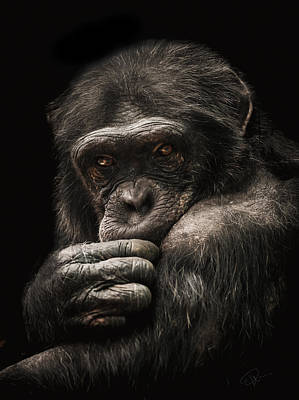Chimpanzee Photograph - Introvert by Paul Neville