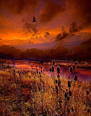 Photograph - Intuition by Phil Koch