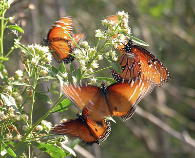 Butterfly In Motion Photograph - Invasion by Reagan Ross