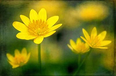 Photograph - Invasive Beauties by Carolyn Derstine