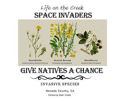 Digital Art - Invasive Species Nevada County, California by Lisa Redfern
