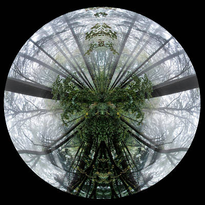 Photograph - Inversion Forest by Wes and Dotty Weber