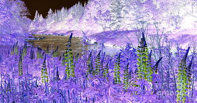 Invert Color Photograph - Inverted Lupines by Mark Guilfoyle