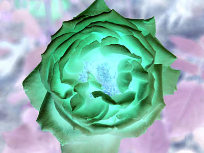 Photograph - Inverted Rose I by James Granberry