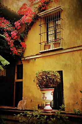 Photograph - Invitado Del Hotel by Diana Angstadt
