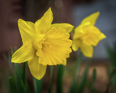 Photograph - Invitation To Spring by Bill Pevlor