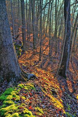 Photograph - Inviting Morning Light In The Forest by Dan Sproul