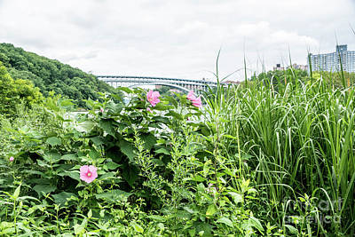 Photograph - Inwood Hill Park  by Cole Thompson