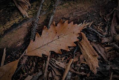 Photograph - Iowa Autumn by Ray Congrove