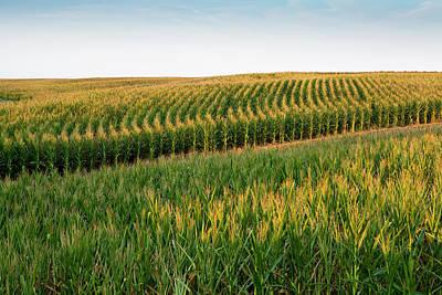 Photograph - Iowa Corn Field by Sharon Foelz