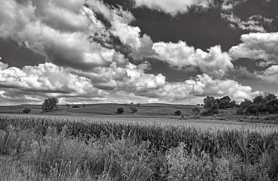 Cornfield Photograph - Iowa Cornfield by L O C