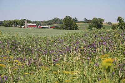 Photograph - Iowa Summer Red And Purple by Dylan Punke
