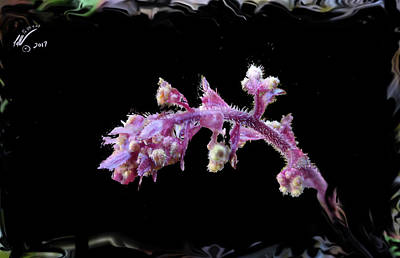 Photograph - Ipomoea Batatas by Leon deVose