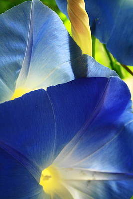 Photograph - Ipomoea, Rising Sun Behind Ll by Steven A Bash