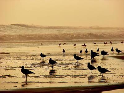 Photograph - Iquique Chile Seagulls  by Brett Winn