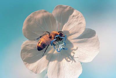 Photograph - Ir Bee 2 by Brian Hale