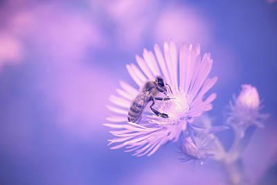 Photograph - Ir Bee by Brian Hale