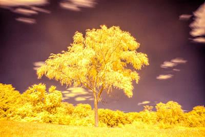 Photograph - Ir Landscape 4 by Lilia D