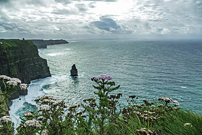 Photograph - Ireland - Flower At The Cliffs by Bill Jordan