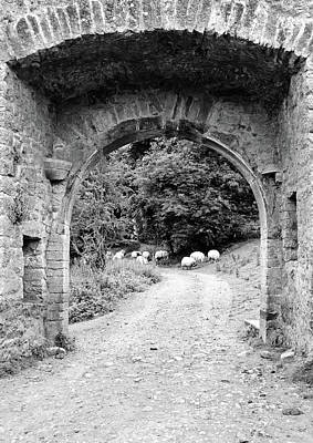 Photograph - Ireland Kells Priory Medieval Entrance Arch And Sheep County Kilkenny Black And White by Shawn O'Brien